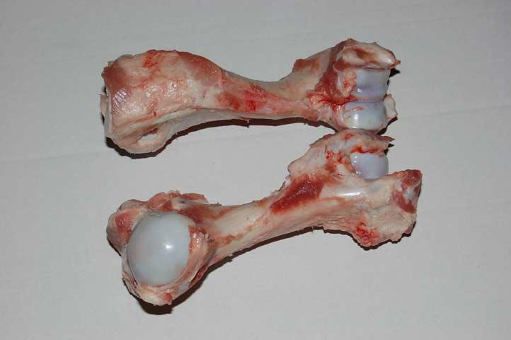 Can You Give Dogs Lamb Leg Bones